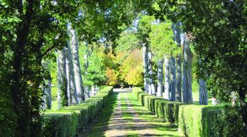 L'allée du chateau Beaulieu