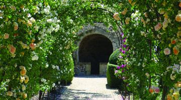 La roseraie du chateau Beaulieu
