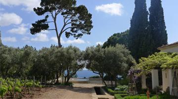 Le domaine de Lorca vignoble et oliveraie