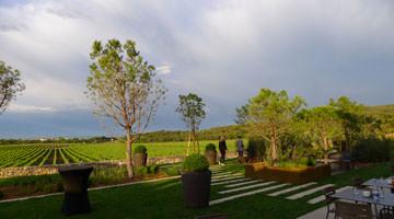 Le vignoble du chateau Valmy