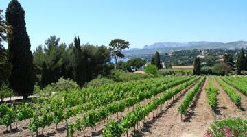 Vignoble du domaine de Lorca à Cassis