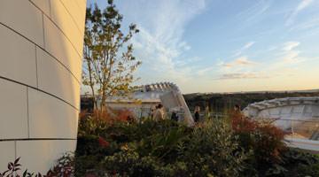 Fondation lvmh : vue du jardin terrasse