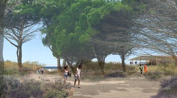 la plage de Pampelonne : la pinède